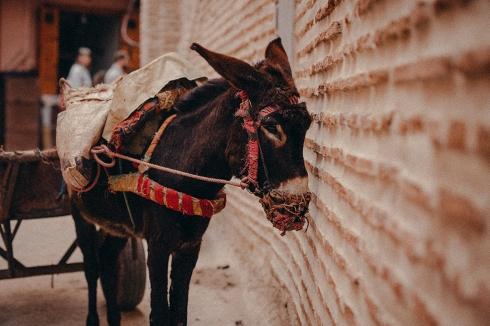 marrakech_reiseblog_03