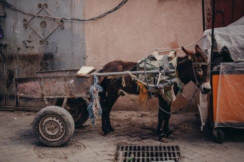 marrakech_reiseblog_14
