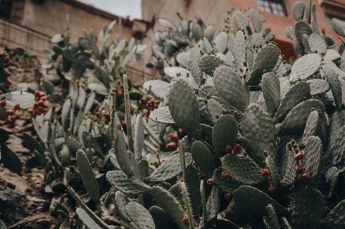 marrakech_reiseblog_29